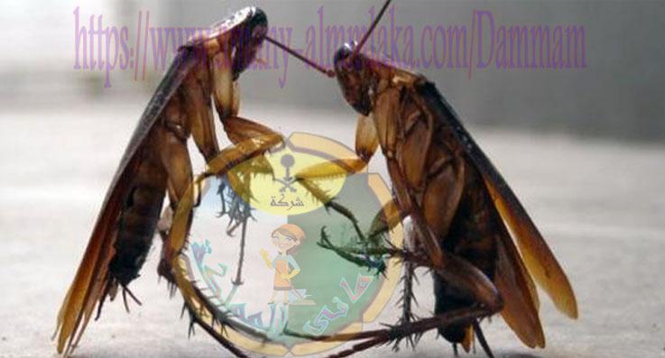 شركة مكافحة الحشرات فى سيهات