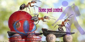 افضل شركة مكافحة النمل الابيض بصبيا
