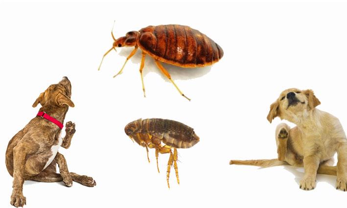 خدمات افضل شركة مكافحة حشرات بجازان