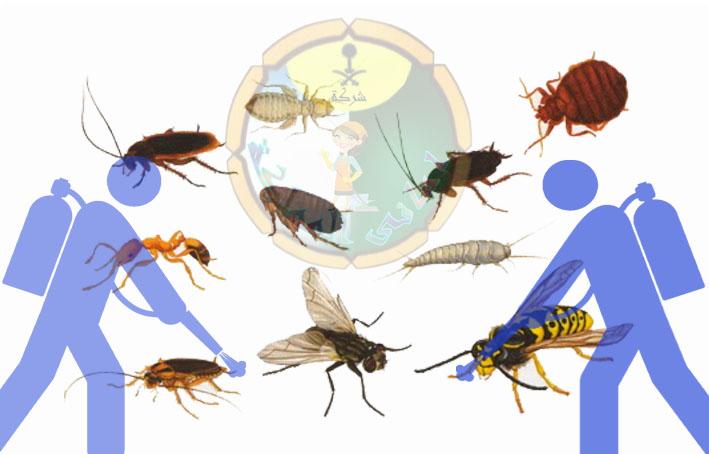افضل خدمات مكافحة حشرات بجازان